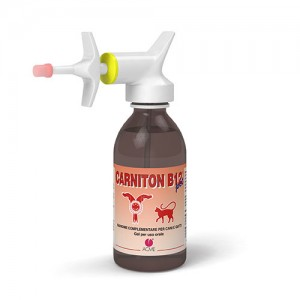 CARNITON B12 GEL 125ML ACME